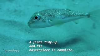 Send Nudes Puffer FIsh meme
