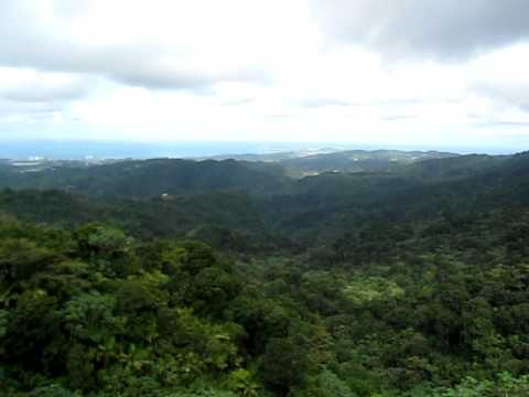 El Yunque National Rain Forest from Observation Tower