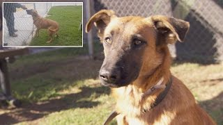 Dog Thrilled To See Owners At Shelter But They're There To Adopt Different Dog