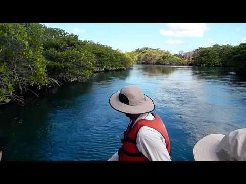 Ecuador: Cruising mangrove inlet, Isla Isabela, Galapagos