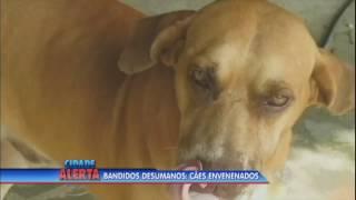 Bandidos matam cães com chumbinho para roubar oficina mecânica