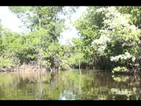 Juan Venado Island, Mangrove Forest