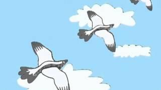 As Músicas da Carochinha Vol. 2 - As pombinhas de catrina