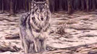 A Tribute to Lone Wolves