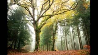 Origa-Слёзы Дубрав (Oak Tears)