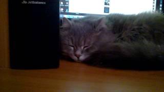 Кот засыпает под Slipknot - AOV мне бы такие нервы