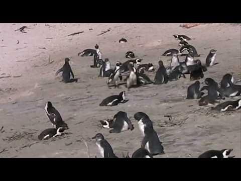 South Africa – July 2010_0001.wmv