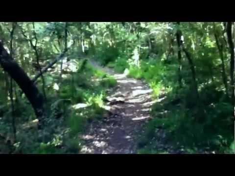 Newland Forest to Kirstenbosch Walk Cape Town