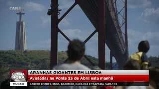 Aranhas gigantes em Lisboa!