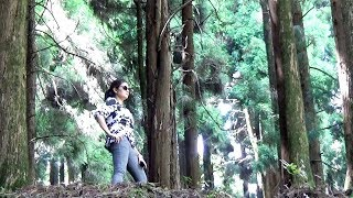 Awesome Pine Forest  in lava  Kalimpong North Bengal