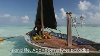 AAAVEEE ISLAND LIFE
