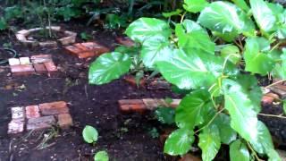El jardin nuevo con caisimon