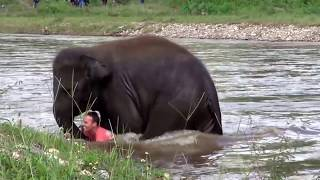 The Incredible Moment When An Elephant 'Rescues' Her Human Friend