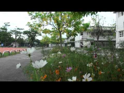阿勃勒及其他美麗花卉 馬光國小校景 - YouTube