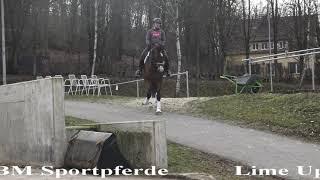 BM Sportpferde / Lime Up Dressur 2019  wallach 6j