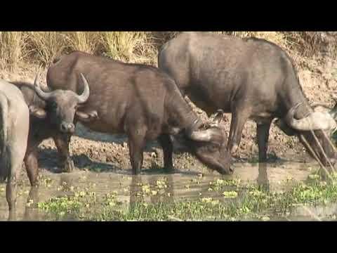 Mama Tembo Tours Zambia Safari