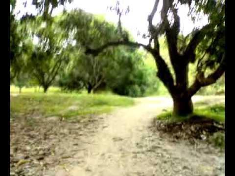 আম বাগান (Mango Garden ?)