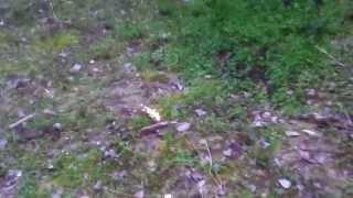 Viper 1 fa saltare una tigre (giocattolo)