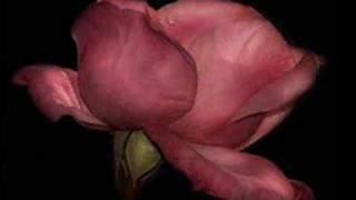 ♥✿.•* ʚïɞ YOUR LOVE - Ennio Morricone & Dulce Pontes ♥✿.•* ʚïɞ