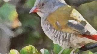 Songbird.... Eva Cassidy