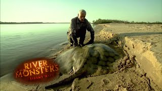 The Short Tailed River Stingray - River Monsters