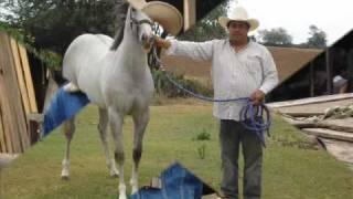 CARLOS Y JOSE (JUANITA Y SU CABALLO  EL NALGON).wmv