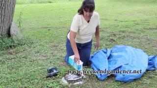 How to Remove a Tree Stump using Epsom Salt
