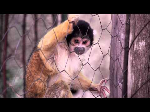International Primate Rescue (4 of 4) : Honey and Girlie
