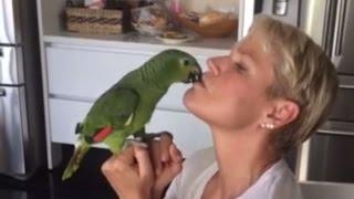 Xuxa e o Papagaio do Cu Cheiroso ORIGINAL (Paródia/Redublagem)