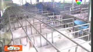 ลุงนิล-การทำเกษตรอินทรีย์