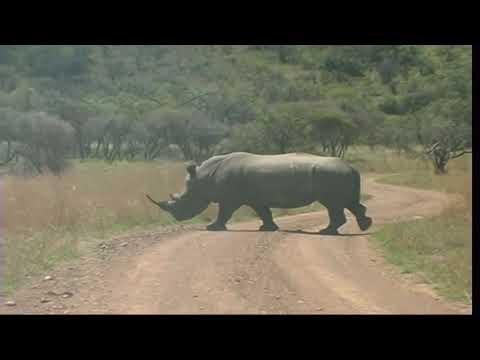 Pilanesberg game reserve. South Africa