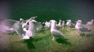 New Order's True Faith remake by Seagulls 2017 - 1987