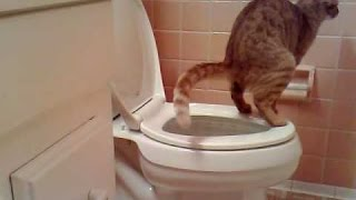 CAT'S DIARRHEA! Funny cat videos, funny cat fart song