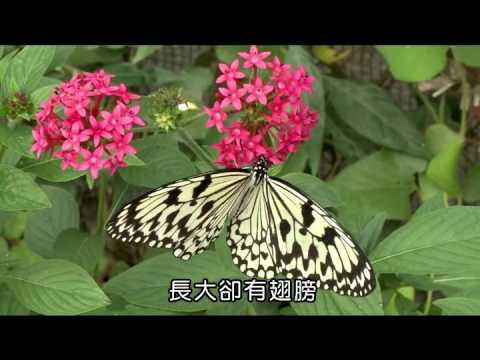 國小_自然_昆蟲的習性【翰林出版_四下_第二單元 昆蟲王國】 - YouTube