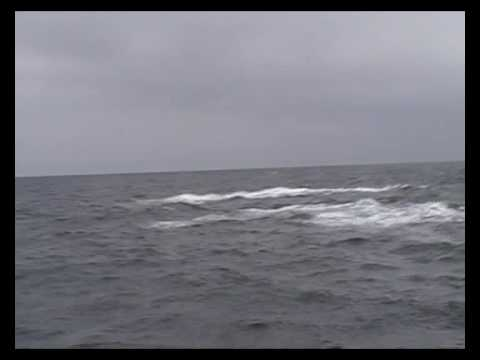 Walvissen springen om onze boot