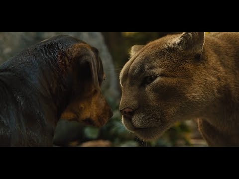狗狗养大一只美洲狮,当狗狗受到伤害,它就会站出来保护狗狗! - YouTube