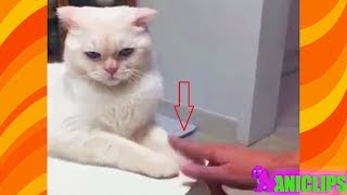 CAT :  Don't Touch Me Anymore