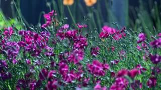Primeiro vídeo do canal :Flores eu gosto delas