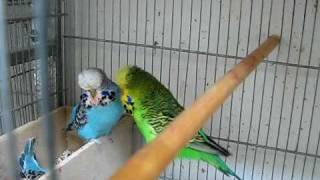 Normal Verde Claro y Normal Azul Claro