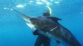 Extreme Blue Water Action Spearfishing DVD