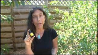 Aromatherapy Essential Oils: Citrus Essential Oils at Aromahead Institute