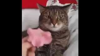 Cat Can't Handle Flower - with sound effect