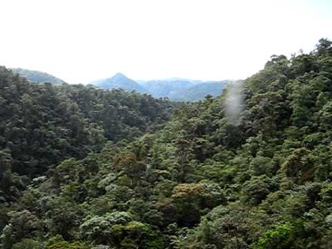 Cable Car Ride in the Jungle Canopy
