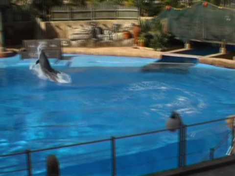 Delfiny w oceanarium w Durbanie 5/5
