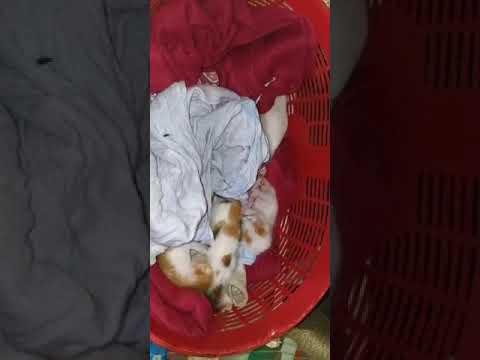 feeding kittens in goa