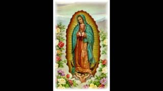 ave maria morena (Guadalupe)