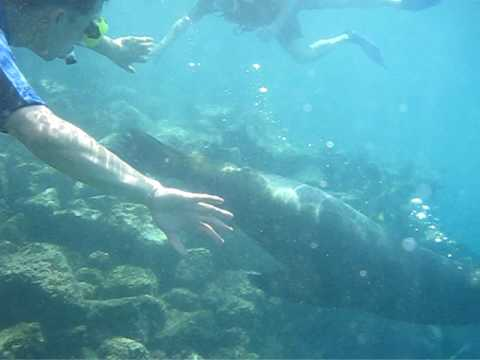 Swimming with Sea Lions in the Galapagos (Part 1)