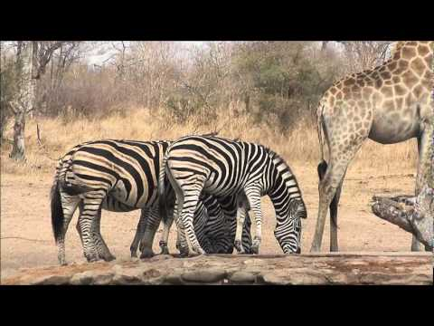 Australia0811 Travels – Journey Through Africa – Kruger National Park, South Africa