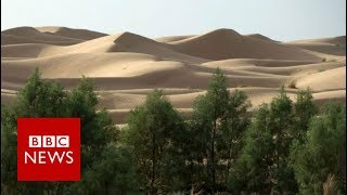 Why is Africa building a Great Green Wall? BBC News width=