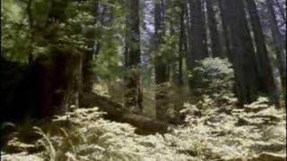"""Sounds Of Kung Fu """"1000 Warrior Monks"""" Meditation Music"""